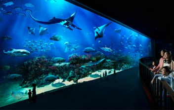 505x320-Marine-Life-Park