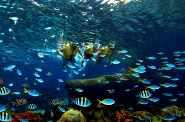 MLP-Adventure-Cove-Waterpark-Rainbow-Reef3