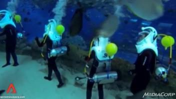 sharks-walk